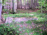 Foto záznam č. 281 - U lesního muže