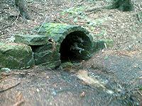 Foto záznam č. 341 - U hadího smrku