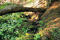 Foto záznam č. 442 - Leschingerova studánka