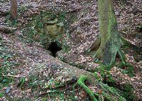 Foto záznam č. 702 - Skalní pramen pod Maškem