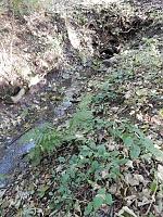 Foto záznam č. 13578 - Baldovský potok 2