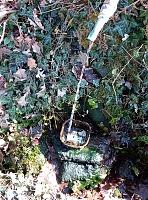 Foto záznam č. 13763 - Beranův lesní pramen
