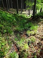 Foto záznam č. 13892 - Pramen Vadětínského potoka 2