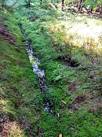 Foto záznam č. 14024 - V Dolním lese 1