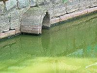Foto záznam č. 1803 - Pramen Jevanského potoka