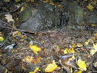 Foto záznam č. 2173 - Pramen Pěnovcového potoka