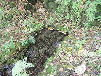 Foto záznam č. 2638 - Zrzánova studánka