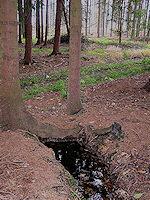 Foto záznam č. 2648 - Lesní