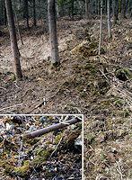 Foto záznam č. 2765 - Ve Chvalčovském lese