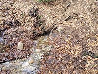 Foto záznam č. 3221 - Pramen Lomského potoka