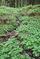 Foto záznam č. 3359 - Pramen potoka Léščí II