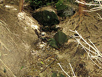 Foto záznam č. 3753 - Pod kameny