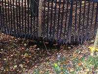 Foto záznam č. 4153 - U plotu