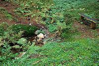 Foto záznam č. 4282 - Šeborecký pramen