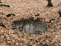 Foto záznam č. 4374 - Studánka v lese Obora
