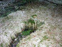 Foto záznam č. 4453 - Lesní pramen