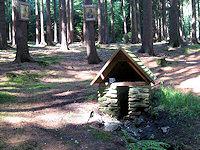 Foto záznam č. 4952 - Panský les