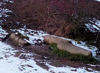 Foto záznam č. 5199 - pramen Březeneckého potoka