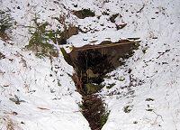 Foto záznam č. 5298 - Pavlíkův les