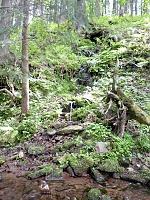 Foto záznam č. 5755 - Dřevěné údolí