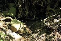Foto záznam č. 5867 - Pod jasanem