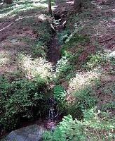 Foto záznam č. 5901 - pramen Zubčického potoka