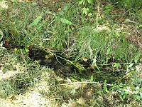 Foto záznam č. 5945 - Prameniště Břehy