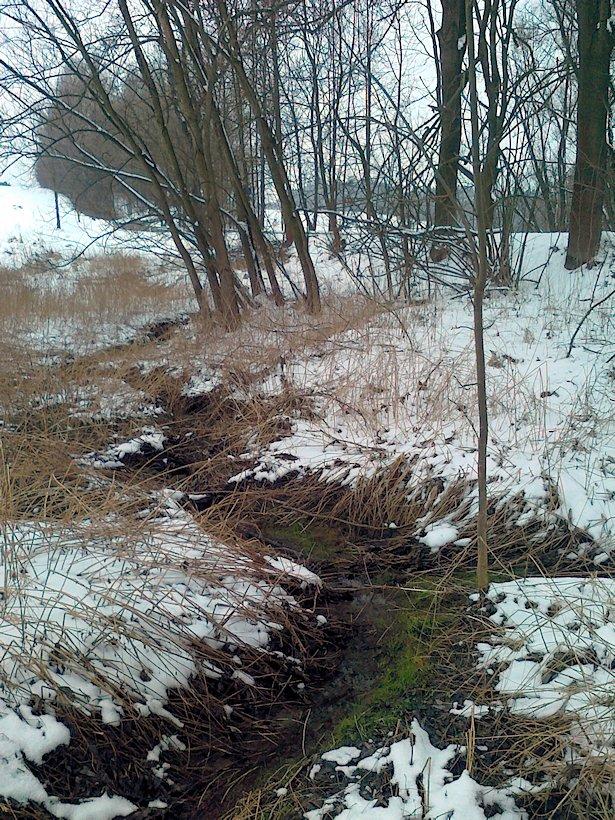 Pramen Lukovského potoka (6494)