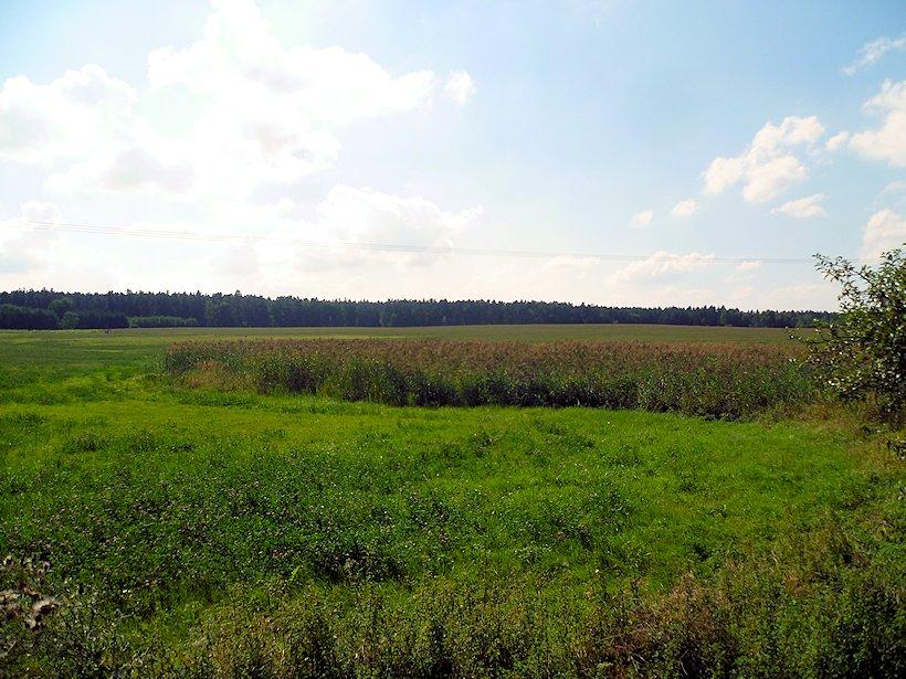pramen Senický potok (7480)