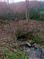 Foto záznam č. 6251 - U rybníčka