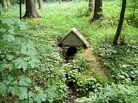 Foto záznam č. 6281 - V Rychnovském lese
