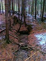 Foto záznam č. 6407 - V Černém lese