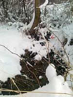 Foto záznam č. 6507 - Pod lesem