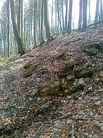 Foto záznam č. 6731 - Ve Vrchnostenském lese
