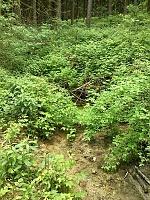 Foto záznam č. 6941 - Pramen Mikulečského potoka