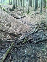Foto záznam č. 6960 - Ve Vrchnostenských lesích