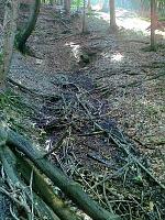 Foto záznam č. 7148 - Pramen Rychnovského potoka