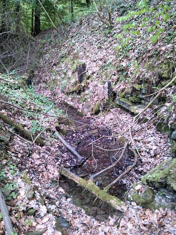 pramen Loukotnický potok II (8518)