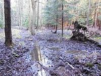 Foto záznam č. 7917 - Pramen Kvíteckého potoka