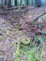 Foto záznam č. 7984 - Zelený pramen