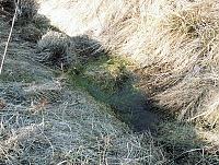 Foto záznam č. 8073 - pramen Milotického potoka