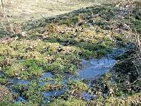 Foto záznam č. 8113 - pramen Zlatého potoka