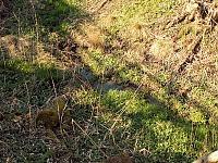 Foto záznam č. 8226 - pramen potoka Hrozová