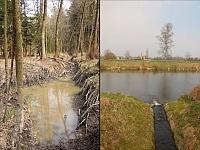 Foto záznam č. 8246 - Morašický potok
