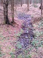 Foto záznam č. 8291 - V Rychnovském lese