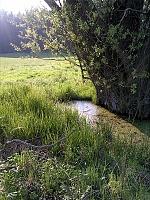 Foto záznam č. 8464 - Dolenský potok