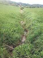 Foto záznam č. 8519 - Pramen potoka Brodec