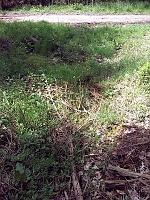 Foto záznam č. 8573 - V Rychtářském lese