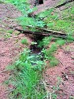 Foto záznam č. 8802 - Černý les