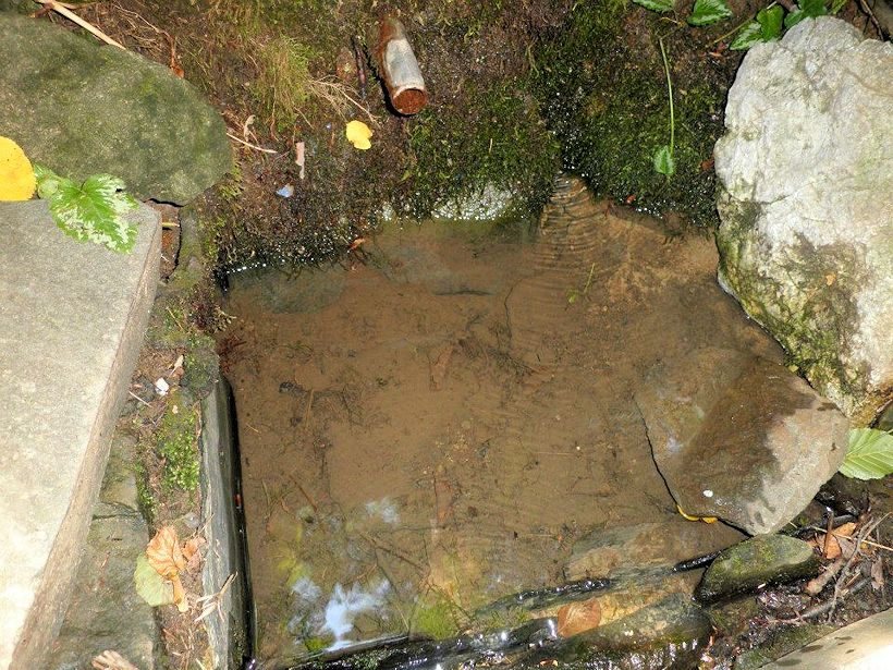 studánka Svatá voda (10147)
